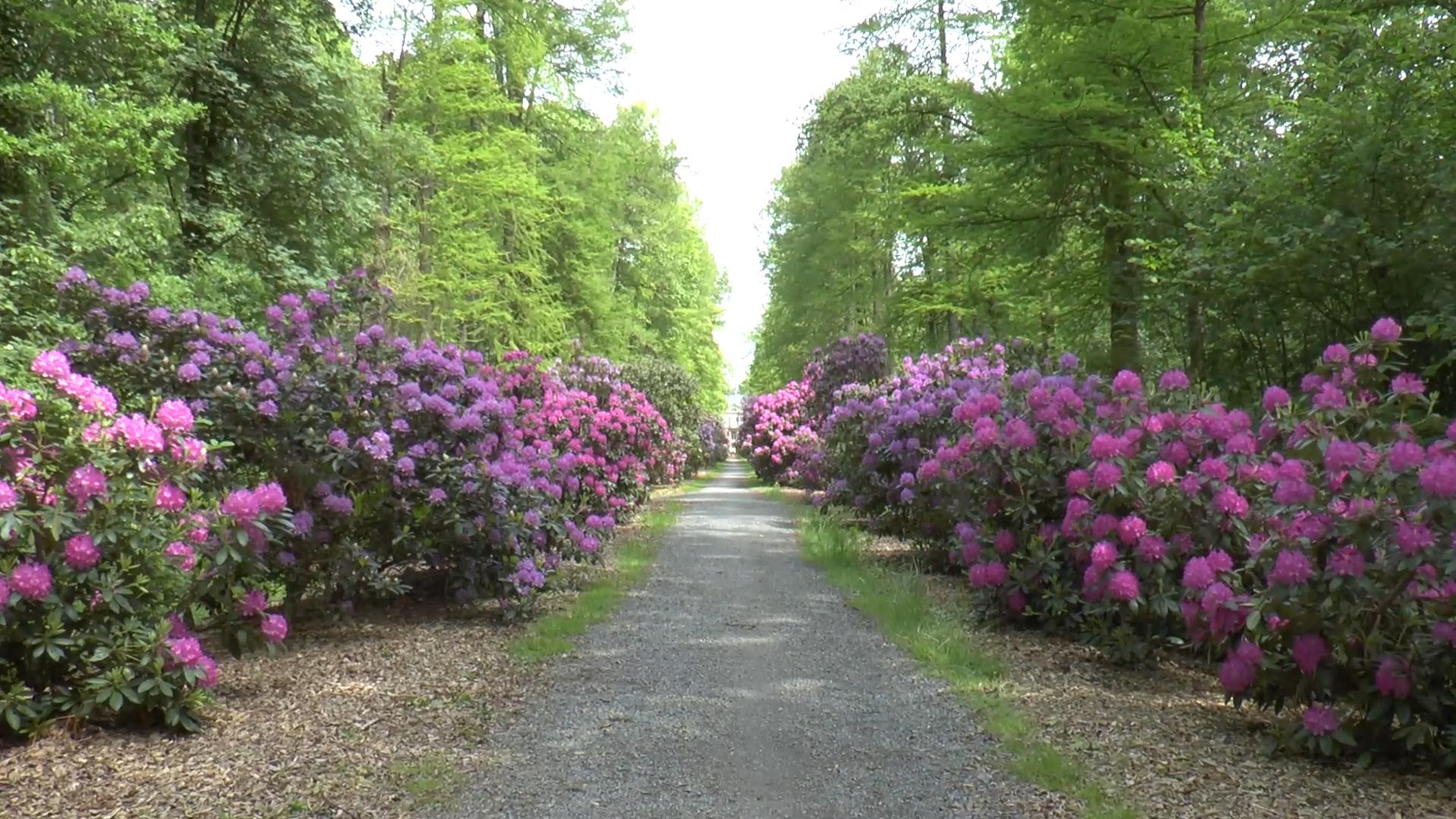 Rhododendron-Weg in Hagenburg