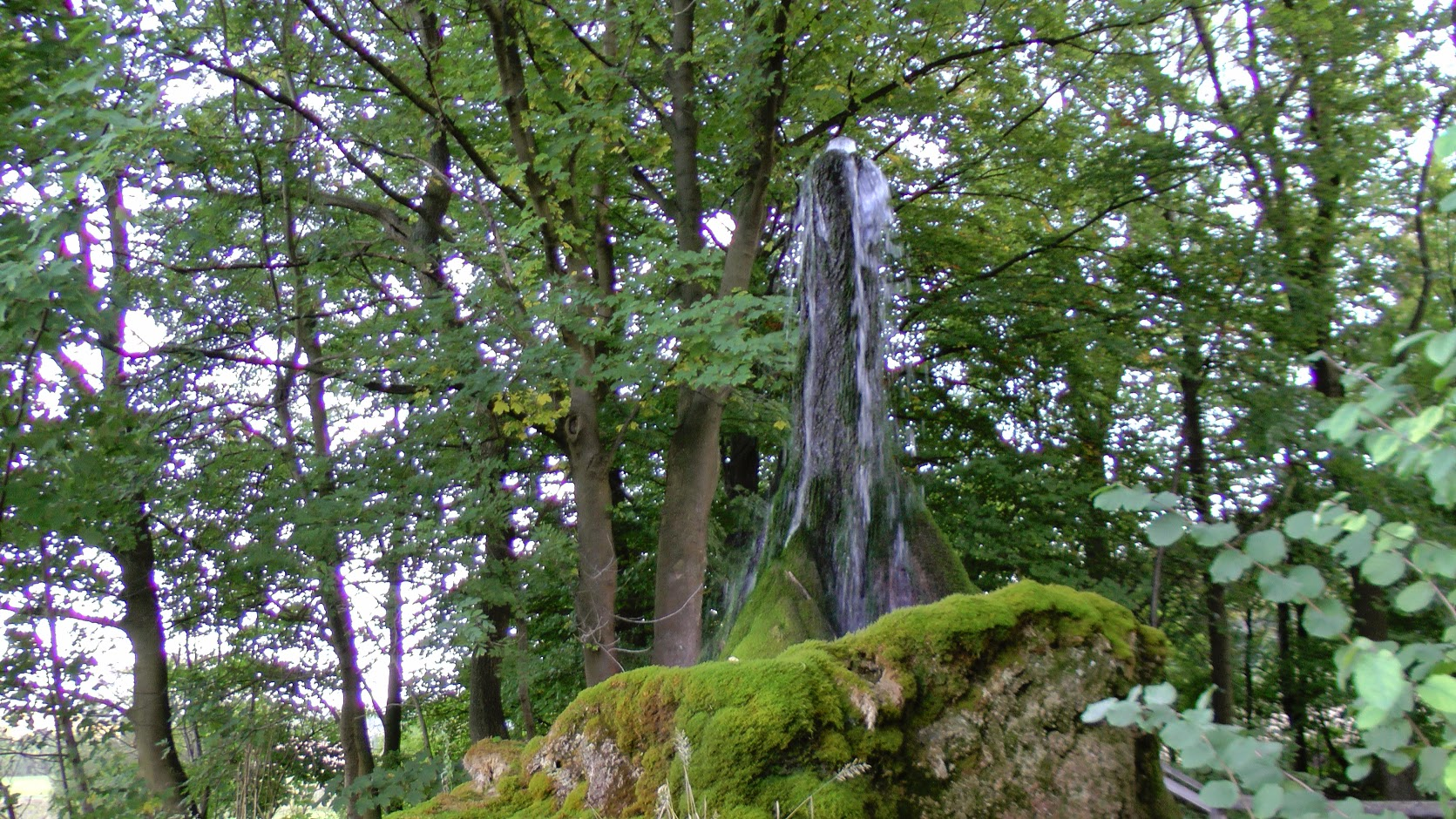 Wasserbaum Ockensen bei Salzhemmendorf
