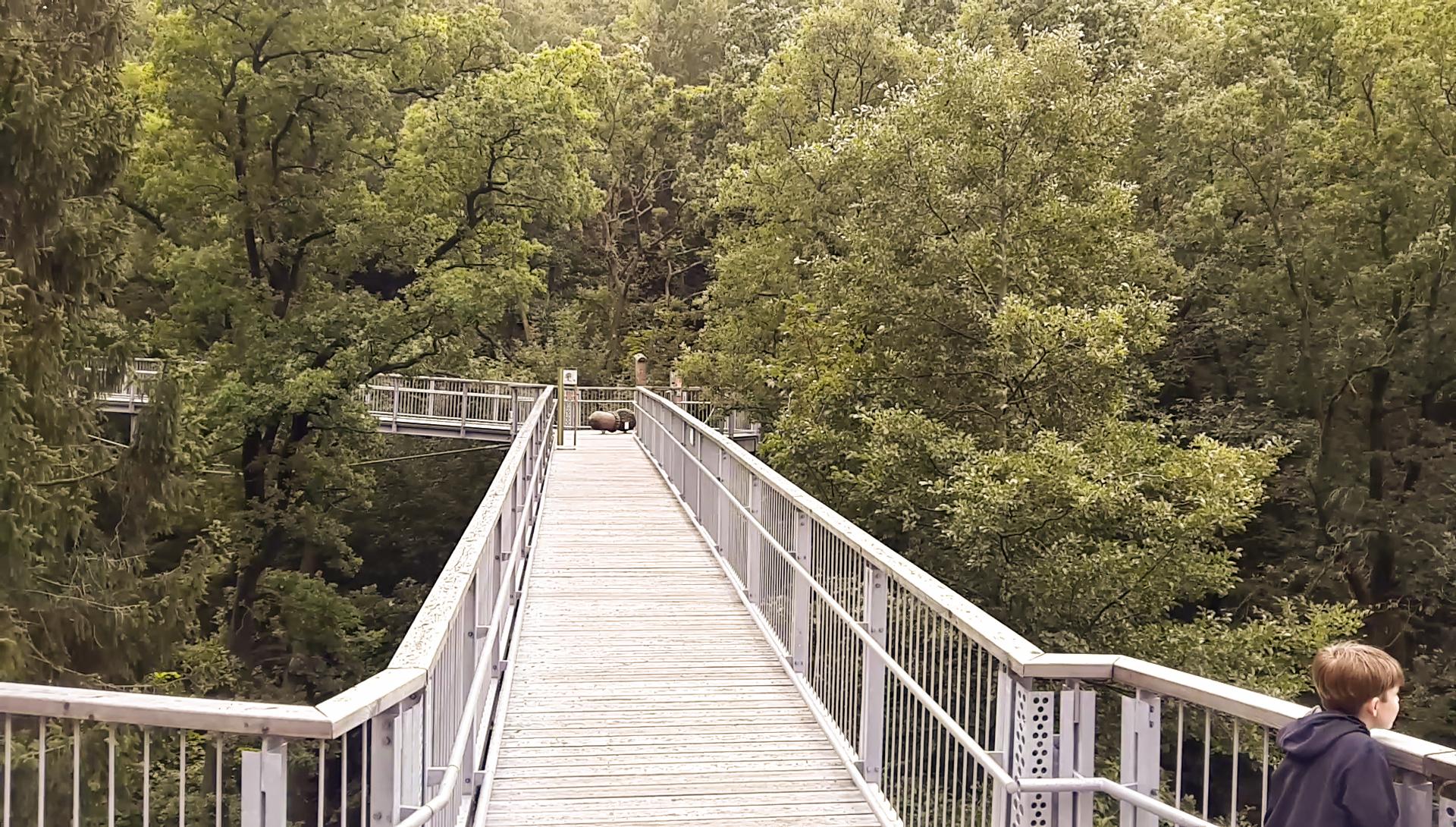 Baumwipfelpfad-Harz
